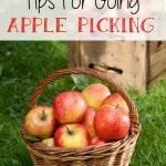 Tips for Going Apple Picking