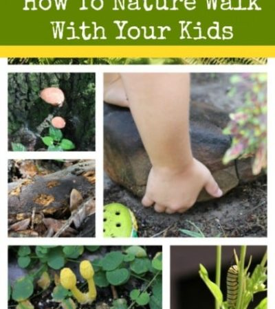 Tips for Going on a Nature Walk With Kids - Where and What to look for on a nature walk with kids and what items to bring on a nature walk with kids .