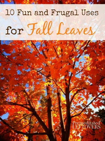 10 Fun and Frugal Uses for Fall Leaves - Not all of your fall leaves need to end up in a leaf bag, save some for these 10 creative uses for fall leaves.