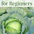 Fall Gardening for Beginners