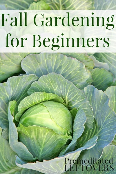 Fall Vegetable Gardening for Beginners - tips for growing cold hardy vegetables in your garden this fall including soil prep and what vegetables to grow.