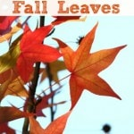 How to Preserve Fall Leaves with Glycerin