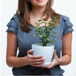 natural ways to care for your houseplants
