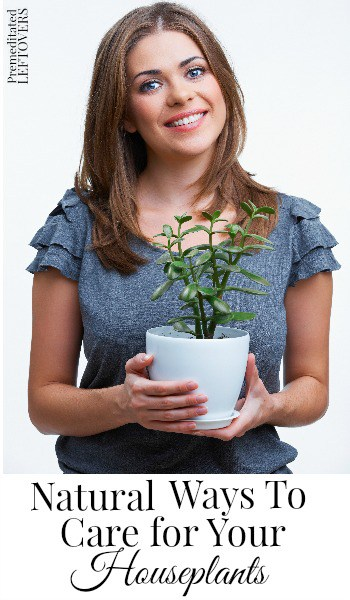 Natural Ways to Care for Your Houseplants- If you are looking for a natural approach to indoor plant care, check out these simple and chemical-free tips.
