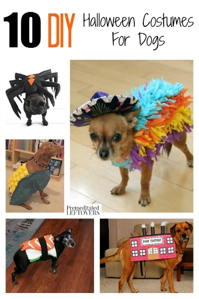 Don't forget your pup this Halloween! Here are 10 awesome, funny and easy DIY Halloween Costumes for Dogs that are sure to get your dog lots of attention!