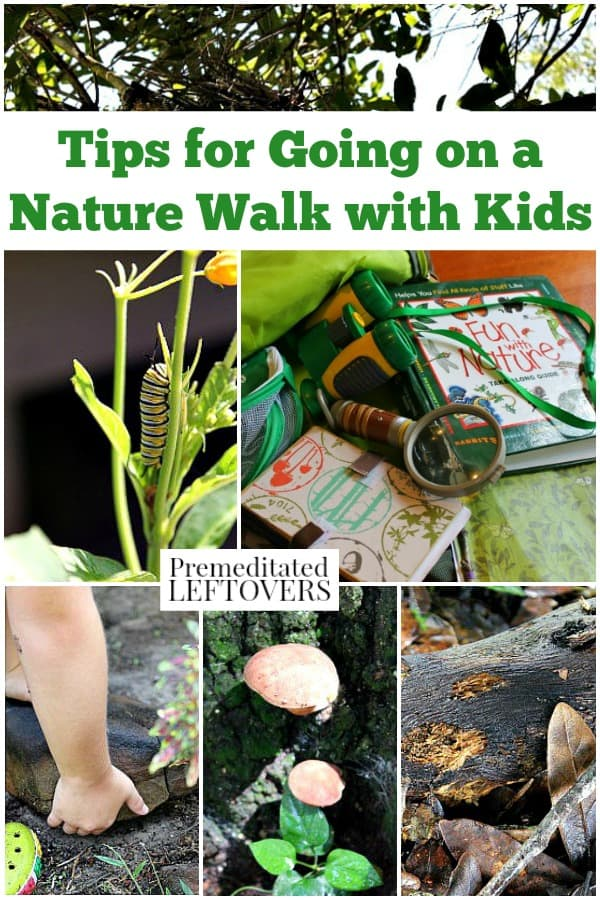 Tips For Going On A Nature Walk With Kids What To Bring And What To