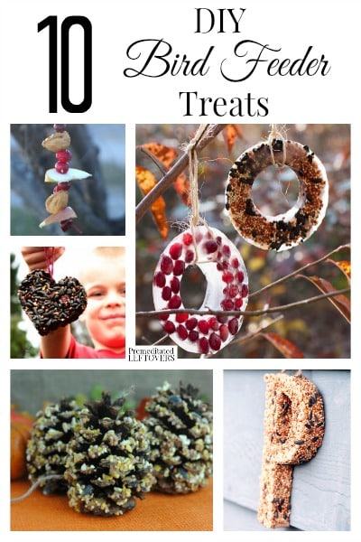 10 DIY Bird Feeder Treats- Bird watching in the winter is a fun thing to do for the young and old alike. These bird feeder treats will draw a great crowd!
