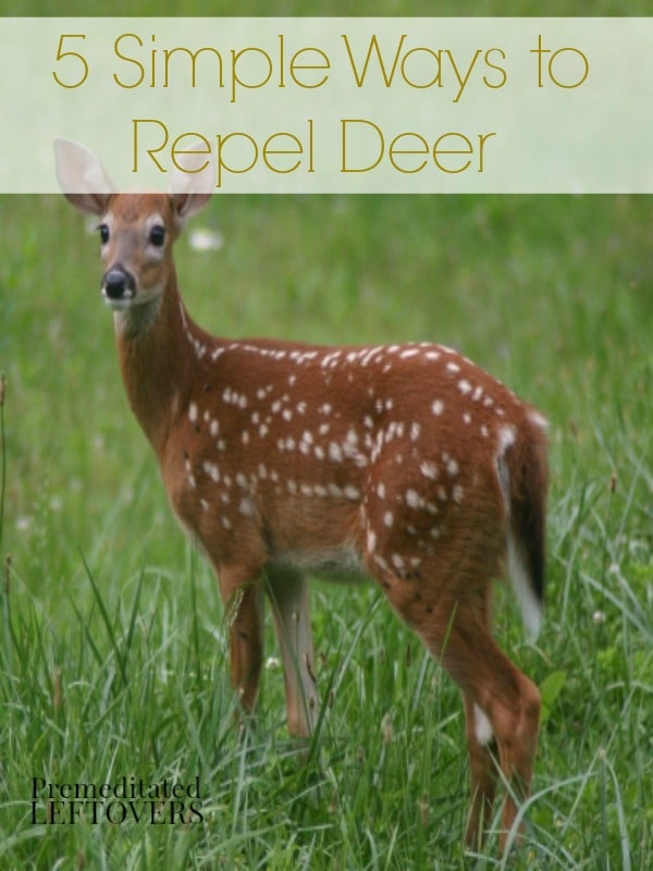 5 Natural Ways to Repel Deer - Here are 5 natural ways to repel deer that will keep the deer out of your garden without harming them.