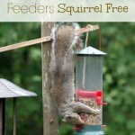 5 natural ways to keep squirrels away from bird feeders