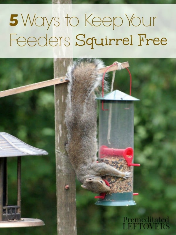 squirrel squirrels system pole your feeder bird baffle with to how a out feeders watch of keep off