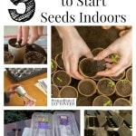 5 Ways to Start Seeds Indoors and tips for starting seedlings. Includes 5 ways to save money by making your own seed starters from recycled materials.