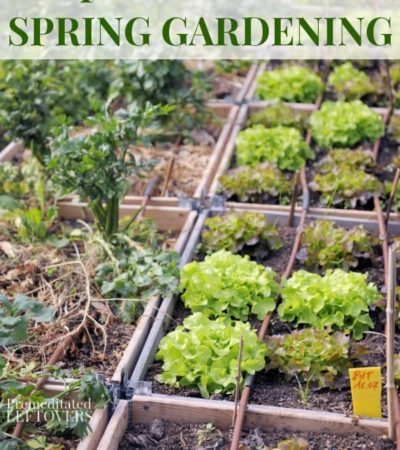 7 Tips for Successful Spring Gardening