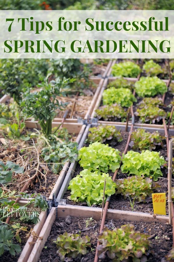 Attractive Spring Vegetables Growing In Raised Garden Beds