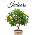 How to Grow Citrus Indoors