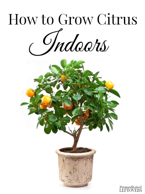 How to grow citrus indoors for What plants can i grow indoors