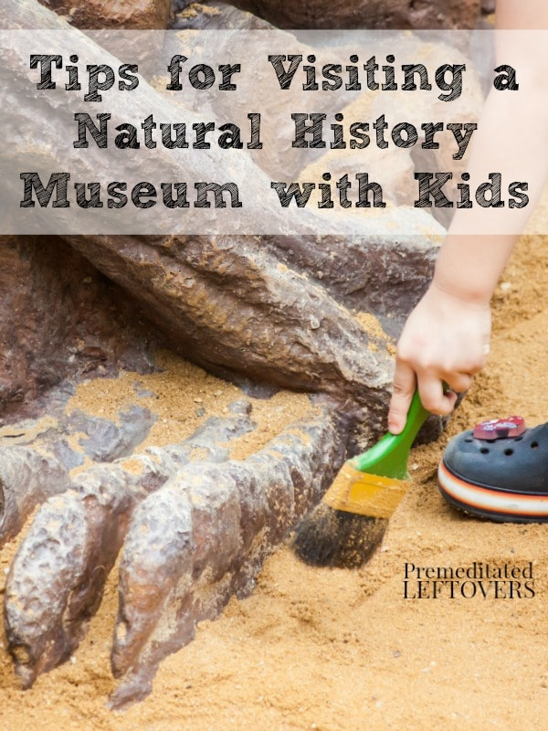 Tips for Visiting a Natural History Museum with Kids - Try these tips for taking your kids to natural history museum for a fun and educational experience.
