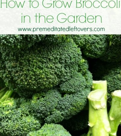tips for growing broccoli in your garden