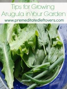 tips for growing arugula