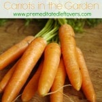 Tips for Growing Carrots in the Garden