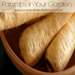 Tips for Growing Parsnips in Your Garden - How to grow parsnips from seed, how to transplant and care for parsnip seedlings, when to harvest parsnips.