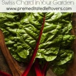 Tips for Growing Swiss Chard in Your Garden