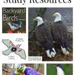 Bird Unit Study Resources including tools to teach about all kinds of birds, books about birds, bird lap-books and online bird resources.