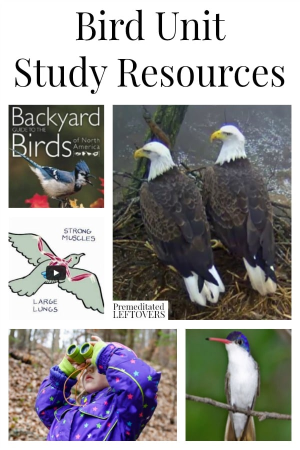 Bird Unit Study Resources including bird lesson plans, online videos about birds, books about birds, bird lap-books and other online bird resources.