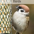How to Attract Spring Birds