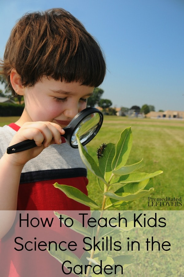 There are so many opportunities to teach valuable science skills in your garden. Here are some tips for How to Teach Kids Science Skills in the Garden.