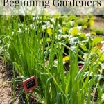 7 Best Vegetables for Beginning Gardeners