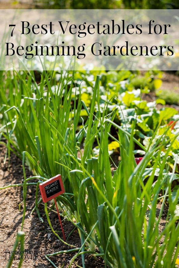 7 Best Vegetables for Beginning Gardeners - Here is  7 vegetables that are easy for beginning gardeners to grow and tips on how to grow them.