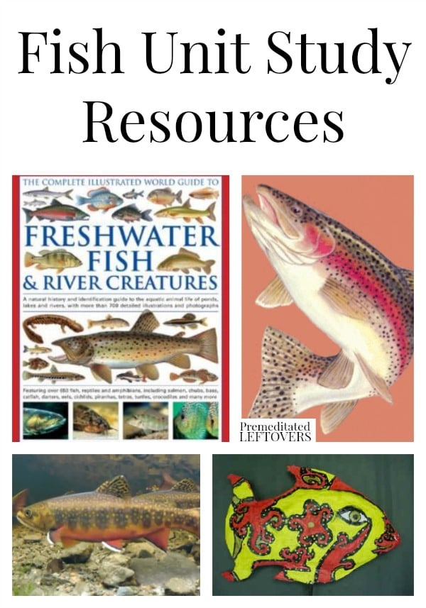 Fish Unit Study Resources including educational fish videos, fish unit study lapbooks and printables, fish craft projects, and more fish unit study ideas.