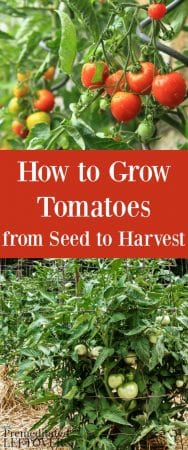 Tips for Growing Tomatoes, including how to plant tomatoes, how to transplant tomato seedlings, and how to care for tomato plants.
