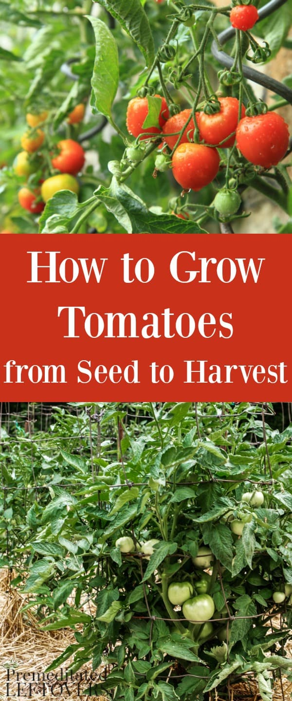 How To Grow Tomatoes In Your Garden From Seed To Harvest