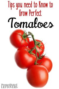 How to Grow Tomatoes - Tips for Growing Tomatoes, including how to plant tomatoes, how to transplant tomato seedlings, and how to care for tomato plants.