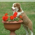Tips for Pet Proofing Your Garden