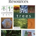 Tree Unit Study Resources including educational tree videos, tree identification projects and other tree unit study ideas.