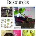 Plant Unit Study Resources including plant lesson plans, plant printables, plant lapbooks, plant videos and plant unit lesson plans.