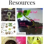Plant Unit Study Resources including plant lesson plans, plant printables, plant lapbooks, plant videos and plant unit lesson plans.