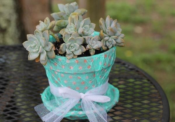 succulent tissue pot