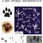 Animal Tracking Unit Study Resources