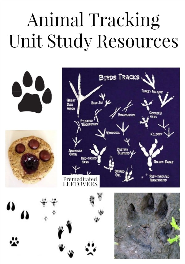 Animal Tracking Unit Study Resources including animal tracking educational videos, animal tracking printables and animal tracking crafts.
