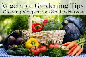 How to grow vegetables in your garden