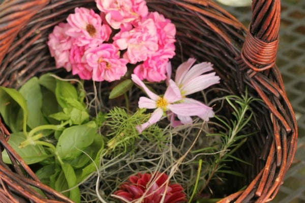 Gathering flowers and other plants for natural paint brushes