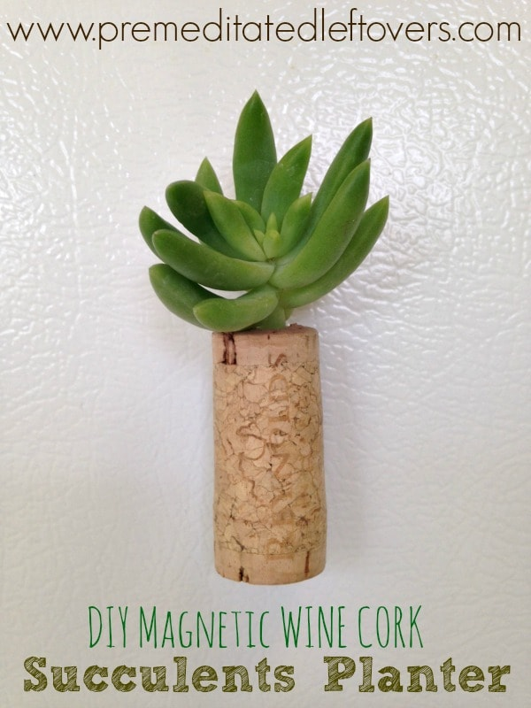 DIY Magnetic Wine Cork Planters for Succulents - Tutorial for making magnetic wine cork plants to start succulent plants on your refrigerator!