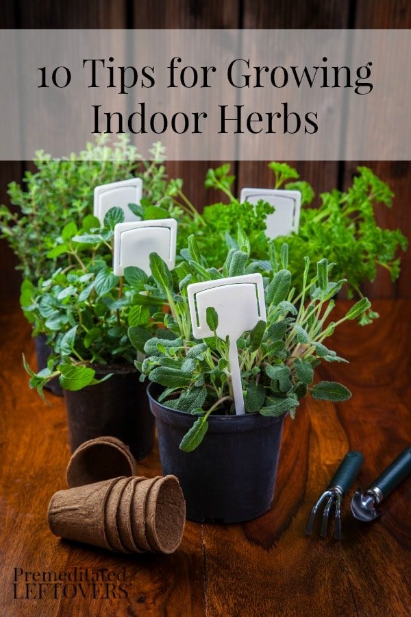 10 Tips for Growing Indoor Herbs