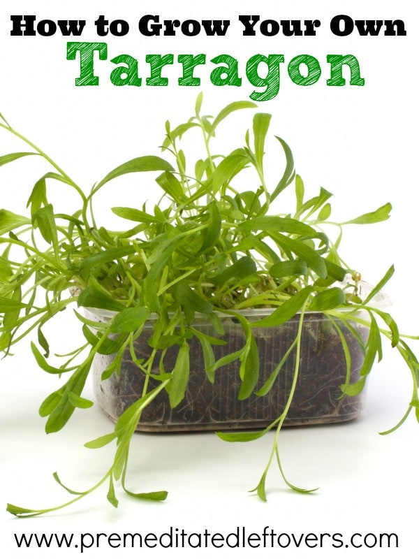 How To Grow It And How To Use It For: How To Grow Tarragon