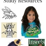 Insect Unit Study Resources including educational insect videos for kids, insect unit study printables, insect lesson plans for kids and insect science.