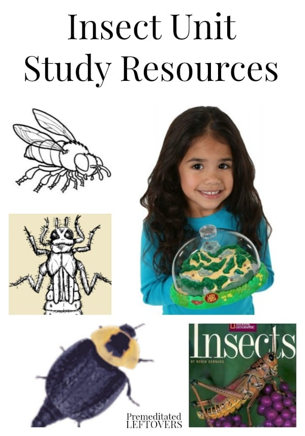 Insect Unit Study Resources, including educational insect videos for kids, insect printables, insect lesson plans and insect books and kits.