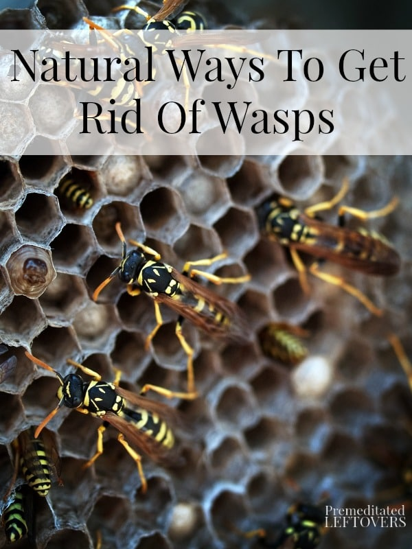 Natural Ways To Get Rid Of Wasps And Hornets